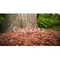 Кора лиственницы 2-6 см средняя 60 л
