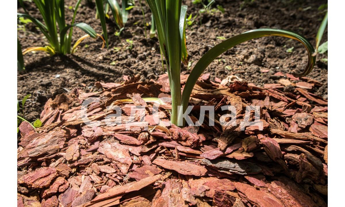Для чего нужно Мульчирование растений